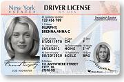 nys drivers license